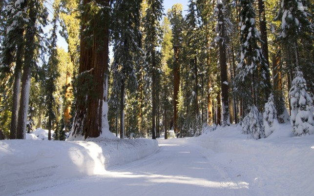 High Trees Lovely Snowy Road wallpapers and stock photos