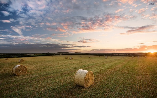 Beautiful Field Hay Bales Sun wallpapers and stock photos
