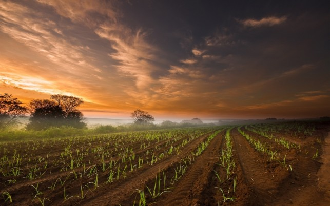 AgriCulture Field & Red Sky wallpapers and stock photos
