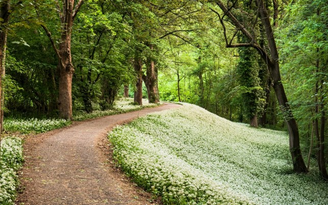 White Blossoms Path Forest Sun wallpapers and stock photos