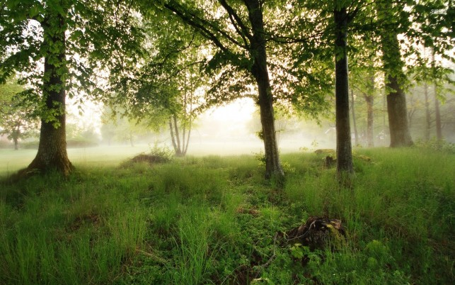 Trees Grass Foggy Morning Sun wallpapers and stock photos