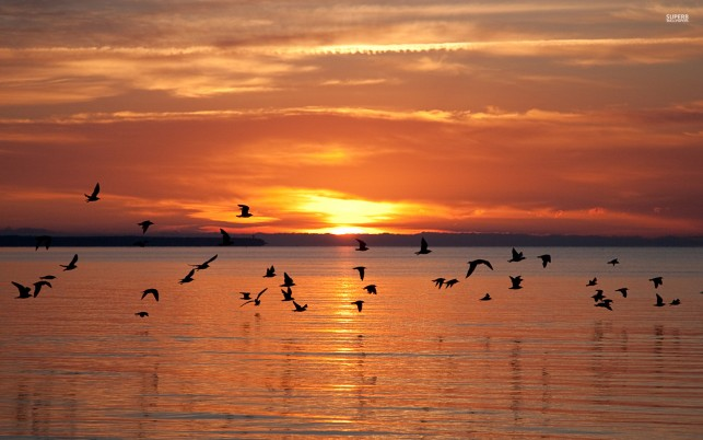 Calm Ocean Birds Fiery Sunset wallpapers and stock photos