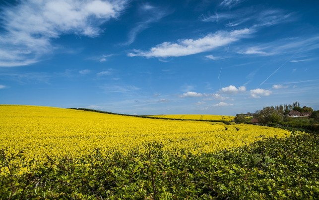 Magnificent Rape Field Houses wallpapers and stock photos