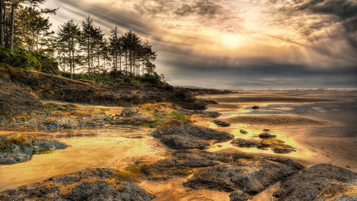 Golden Sea Shore Trees Sunset wallpapers and stock photos