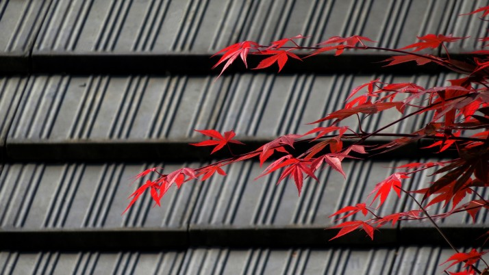 Random: Roof and Red Leaves