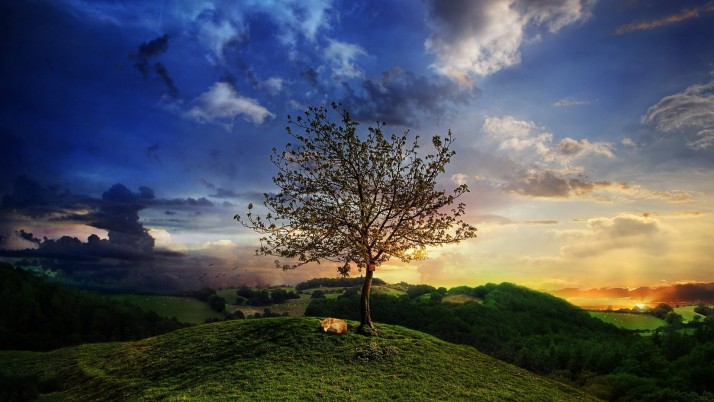Hills Trees Kitty Great Sunset wallpapers and stock photos