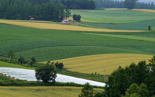 Nice Green Fields AgriCulture wallpapers and stock photos
