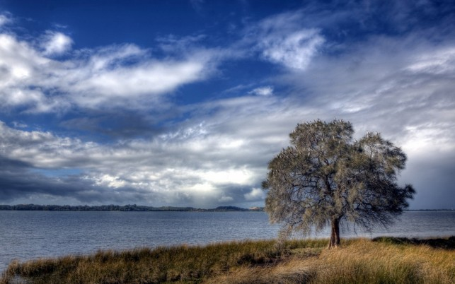 River Shore Tree Grass Sky wallpapers and stock photos