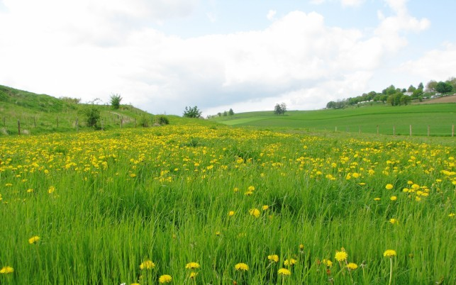 Previous: Dandelion Field Houses Trees