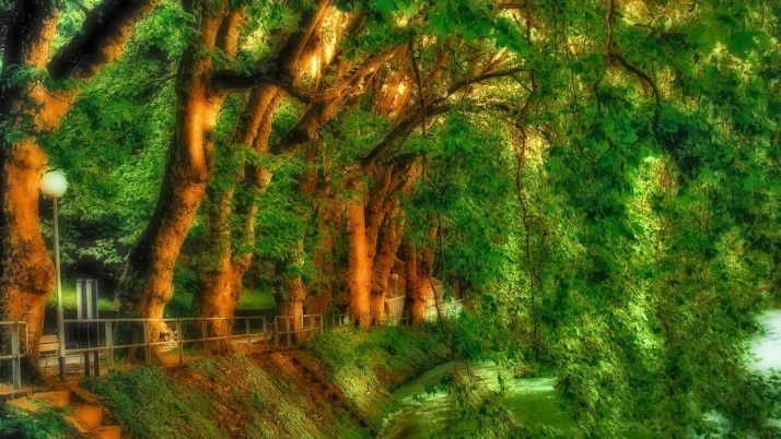 Beautiful Green Trees Park wallpapers and stock photos