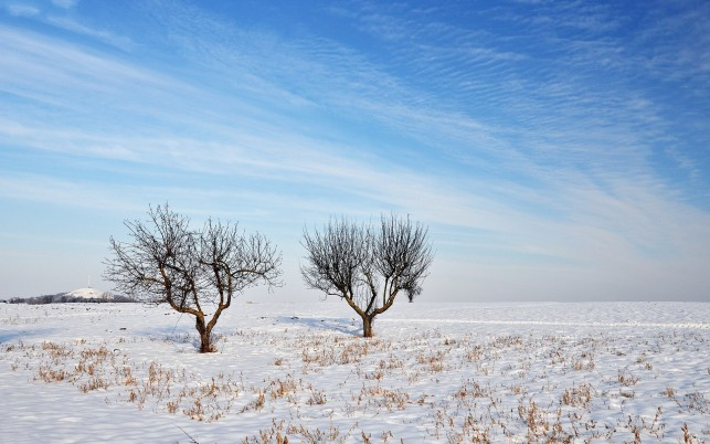 Dried Up Trees & Snowy Field wallpapers and stock photos