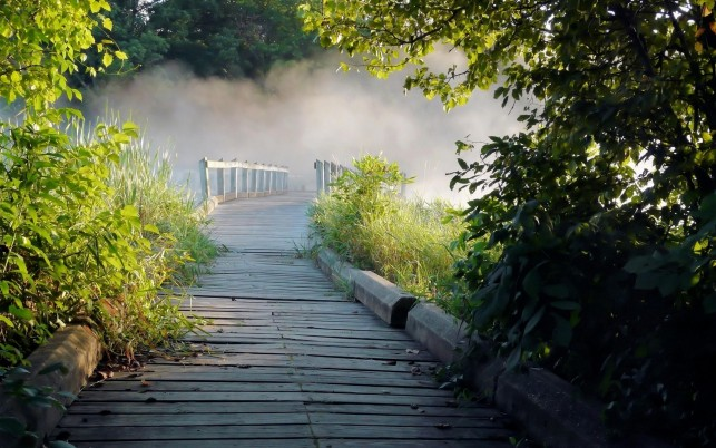 Wooden Bridge Plants Misty wallpapers and stock photos