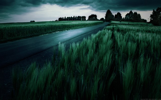 Random: Amazing Dark Green Wheat Field