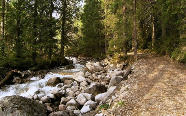 Wild Creek Path Rocks Wood wallpapers and stock photos