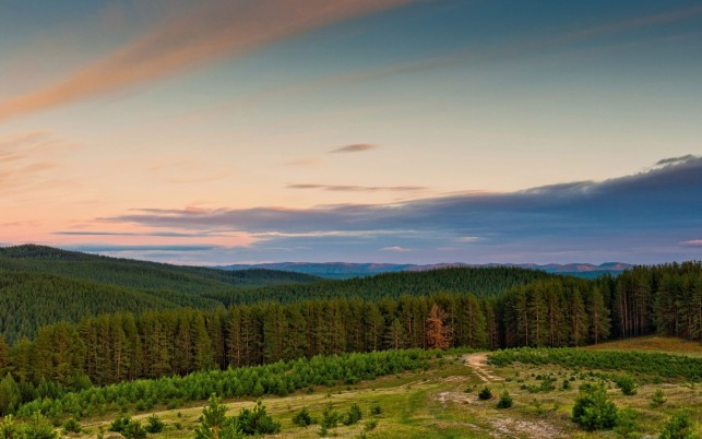 Gorgeous Forest Edge Horizonte wallpapers and stock photos