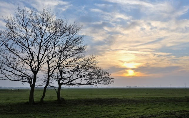 Field Bare Trees Clouds Sunset wallpapers and stock photos