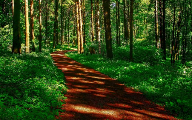 Brown Path Green Plants Wood wallpapers and stock photos