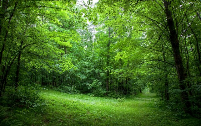 Lush Green Waldweg Sunny wallpapers and stock photos