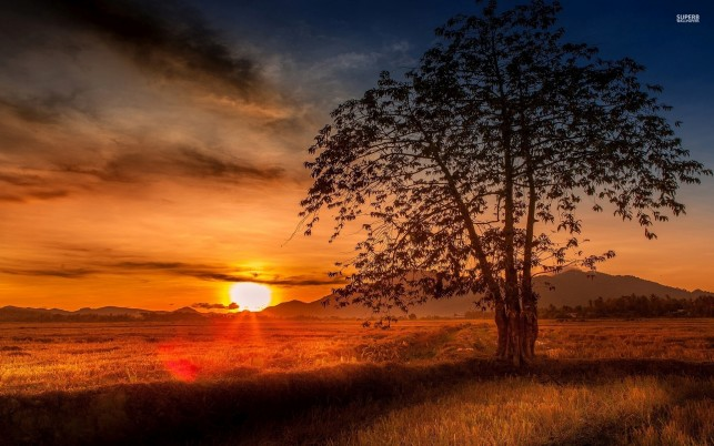 Peak Field Tree Burning Sunset wallpapers and stock photos