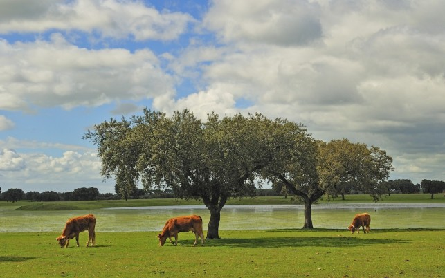 Nice Pasture Cows Trees River wallpapers and stock photos