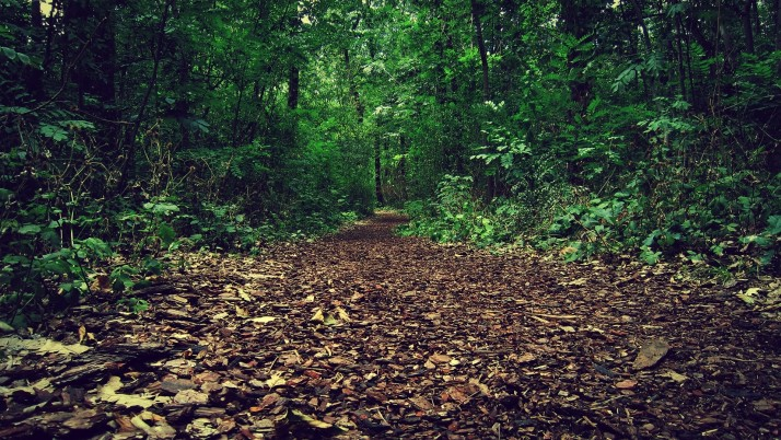 Brown Path Grass Green Forest wallpapers and stock photos