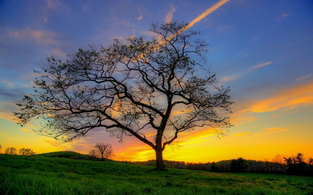 Nice Tree Meadow Golden Sunset wallpapers and stock photos