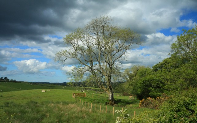 Nice Pasture Sheeps Tree Fence wallpapers and stock photos