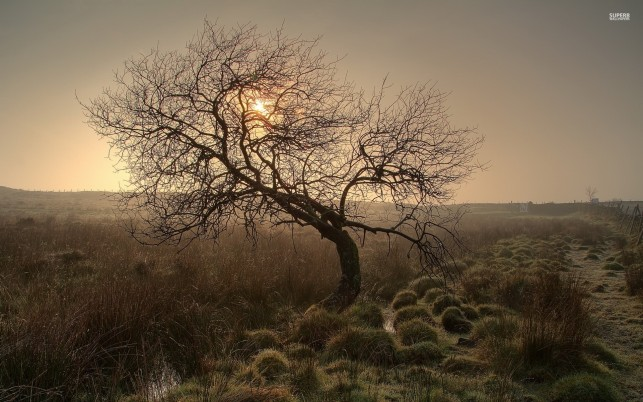 Lone Tree Field Grass Sunset wallpapers and stock photos