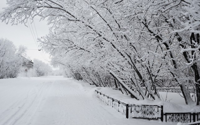 Deep Winter Snowy Trees Road wallpapers and stock photos