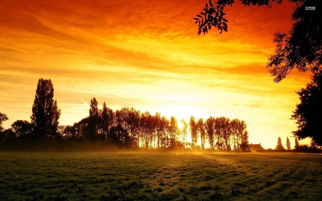Field Tall Trees Orange Sunset wallpapers and stock photos