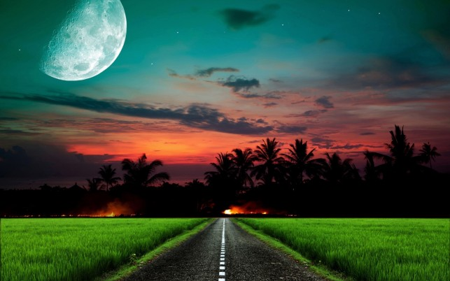 Random: Road Grass Palms Moon Sunset