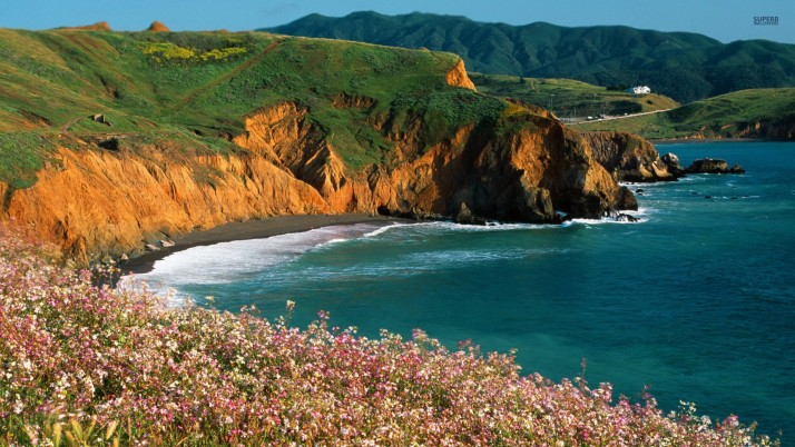 Ocean Green Cliff Road Flowers wallpapers and stock photos