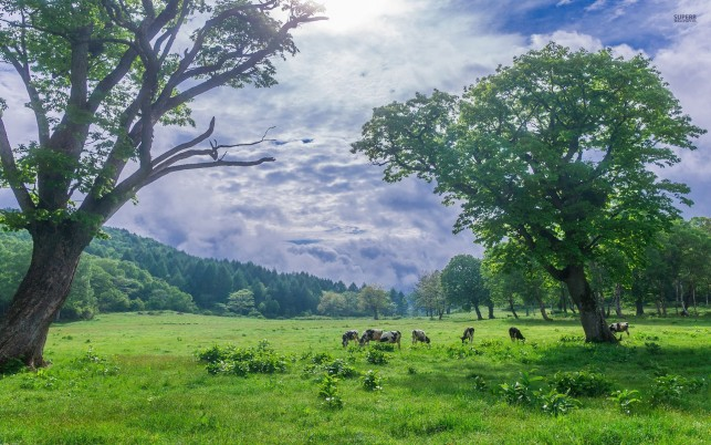 Next: Vibrant Pasture Cows Trees Sky