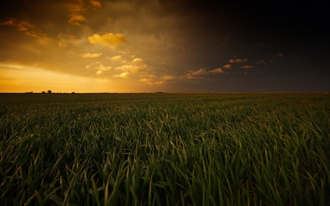 Marvelous Grass Field & Sunset wallpapers and stock photos