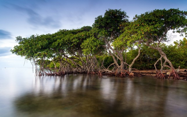 Trees Roots Lake Surface Sleek wallpapers and stock photos