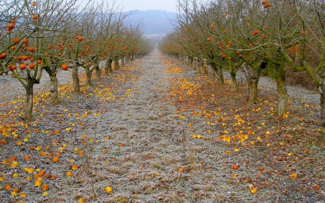 Splendid Apple Alley Frost Way wallpapers and stock photos
