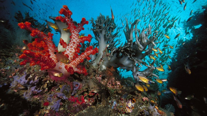 Fishes Swarm Corals Ocean Bed wallpapers and stock photos
