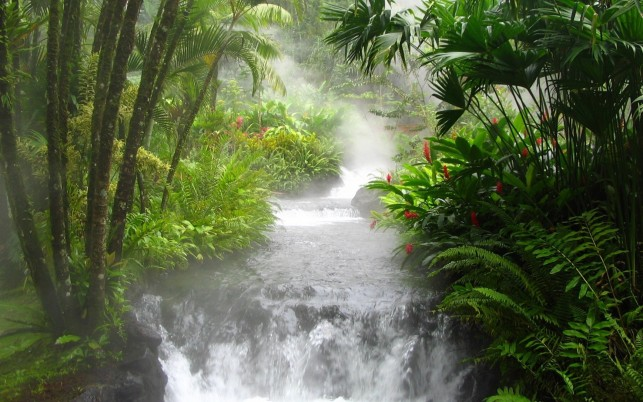 Wild Waterfall Plants Jungle wallpapers and stock photos