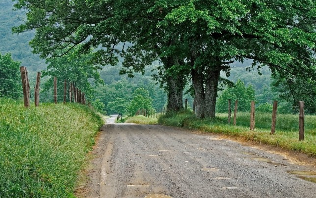 Country Road Green Trees Fence wallpapers and stock photos