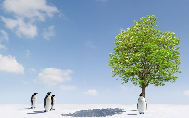 Penguins Green Tree Antarctica wallpapers and stock photos