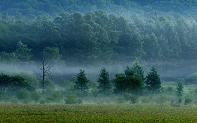 Delightful Green Trees Foggy wallpapers and stock photos