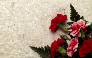 Carnation Decor wallpapers and stock photos