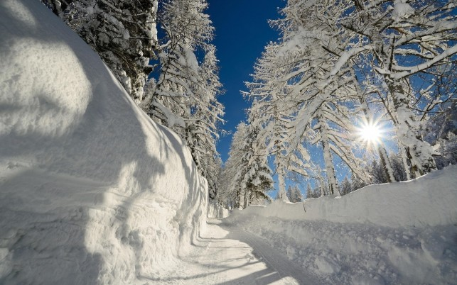 Snowy Road Trees Snow Walls wallpapers and stock photos