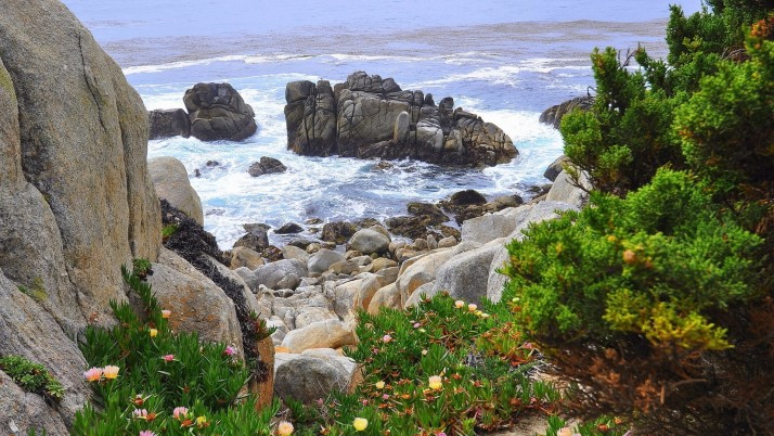 Foamy Ocean Rocks Plants Trees wallpapers and stock photos