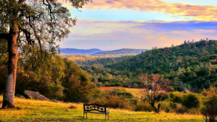 Autumn Forest Bench Lookout wallpapers and stock photos