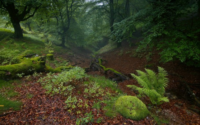 Delightful Hill Plants Forest wallpapers and stock photos