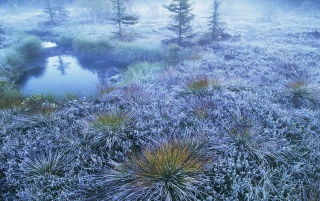 FrozenGrass wallpapers and stock photos