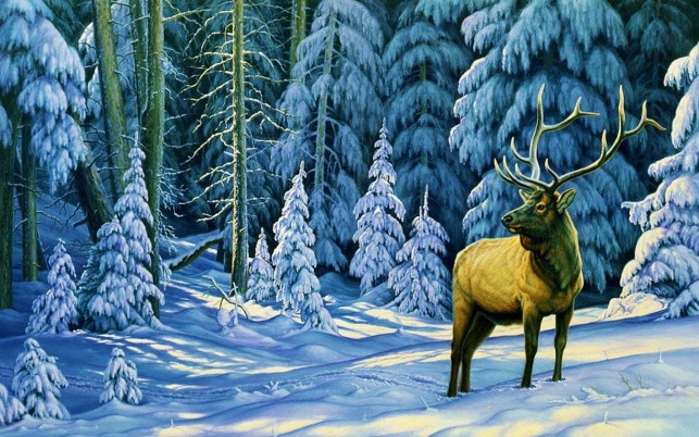 Gallant Deer Winter Forest wallpapers and stock photos