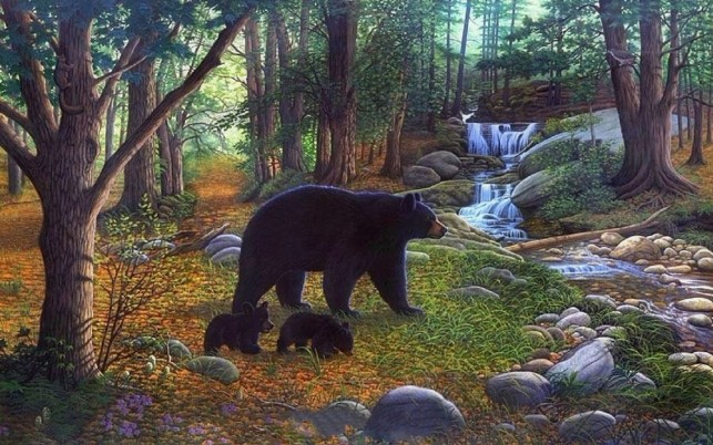 Forest Bears Waterfalls Creek wallpapers and stock photos