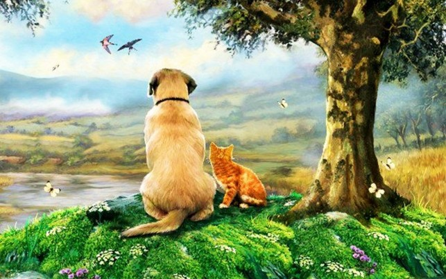 Dog & Kitty Lookout wallpapers and stock photos